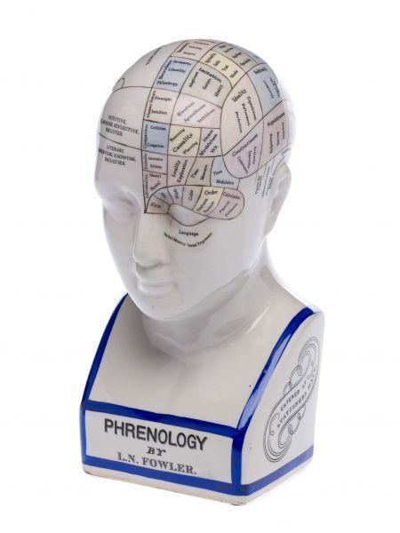 Phrenologie Kopf 30cm Fowler Büste Anatomie Heilpraktiker Arzt Medizin medicine