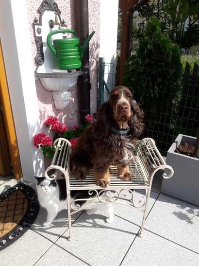 Herzlichen Dank liebe Kundin, für das tolle Foto unserer Gartenbank mit Hund und Katze. Ein Schnappschuss wie er nicht besser machbar ist. ❤️ Herzlichen Dank das Sie uns daran teilhaben lassen. Liebe Grüße nach Österreich senden die Kreiner Brüder