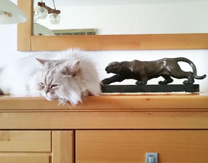 Lieber Andreas, Dankeschön für den tollen Schnappschuss. Die Katze scheint auch ganz glücklich mit dem Panther zu sein. ❤️ Alles gute senden Eric & Thomas