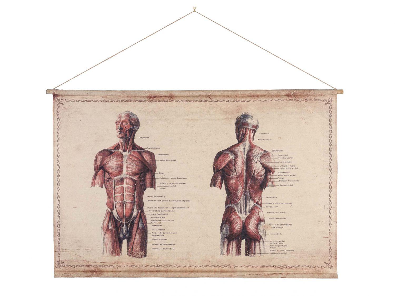 Schulkarte Lehrkarte Wandkarte Anatomie Muskel historische Karte ...